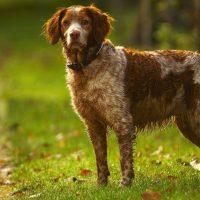 muddy wet dog in field
